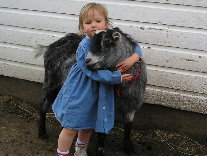 Wethers make great pets!
